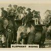 Elephant Riding.