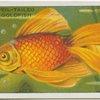 Veil-Tailed Goldfish.
