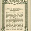 African Rhinoceros.