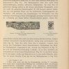 Das Pflanzenornament in der griechischen Kunst. Fig. 76. Gemalte Verzierung von einem klazomenischen Thonsarkophag; Fig. 77. Von einem klazomenischen Sarkophag.