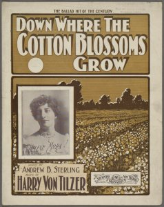 Down where the cotton blossoms grow / words by Andrew B. Sterling ; music by Harry Von Tilzer.