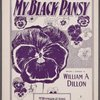 My black pansy
