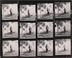 Photographs of Noël Coward near palm trees