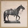 [Rienzi, the horse General Philip Henry Sheridan rode to Winchester.]