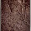Indian Ladder Trail, John Boyd Thacher State Park, Voorheesville, New York