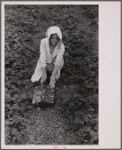 Migrant strawberry picker