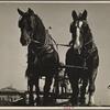 Horses. Beltsville, Maryland.
