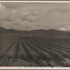 Sugar beet field freshly plowed, deep furrows of rich black soil. Calif. Large scale extensive farming. 1936