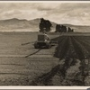 Sugar beet field showing tractor with plowshare attached and Mexican operator. California.]