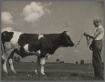 Inbred bull. Prince Georges County, Beltsville, Maryland.