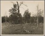 Cedar rail fence at Wilson Cedar Forest Project near Lebanon, Tennessee.