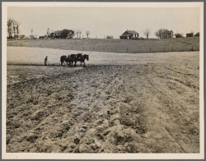 [Plowing on a Maryland farm?]