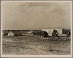 The mecca of hundreds of drought refugees seeking work and resettlement. Cotton and potatoes provide employment. Squatter camp in Kern County, California
