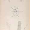 The fly: Fig. 1. Section of Fly, showing nervous system, &c.: a, wing; b, nervous system, Fig. 2. Antenna of fly, Fig. 2a. Sensory depressions  and closed sacs on the same, highly magnified. , Fig. 3. One of the halteres, Fig. 3a, b. Vesicles at the base of the same, highly magnified, Fig. 4. Leg of fly: a, coxa; b, trochanter; c, femur; d, e, tibia; f, tarsus, Fig. 5. Trachea, or respiratory tube, with coil.
