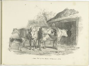 [Cows outside a barn.]