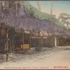 Wisteria blossoms Daitokuji Temple, Nagasaki.