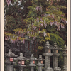Wisteria flowers and stone lanterns at the ground of Kasuga Shrine.