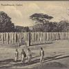 Brazen Palace, Anuradhapura, Ceylon.
