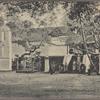 Sacred Bo-tree, Anuradhapura, Ceylon.