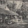 Boralesgamuwa: A rural scene, Colombo, Ceylon.