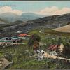 General view of tea estate.
