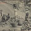 Cocoa gathering (Ceylon).
