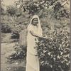 A tea plucker, Ceylon.