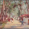 Ceylon.  Road near Colombo.