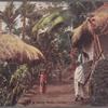 A village scene, Ceylon.