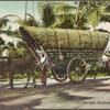 Double bullock cart, Colombo.