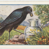 The crow and the pitcher.
