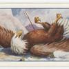 The eagle and the arrow.