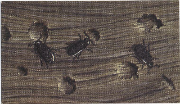 Wood gnawed by beetles.