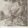 Anno 1724. Haben Thro Hochfürstl. Durchl. Eberhard Ludwig Herzog zu Würtemberg disen Hirsch in der Brunfft auf dem Direnberg Einsidler huth Tübinger Forsts selbst geschossen.