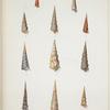 1. Turritella bicolor; 2. Turritella congelata; 3. Turritella conspersa; 4. Turritella miltilirata; 5. Turritella vittulata; 6. Turritella monilifera; 7. Turritella opalina; 8. Eglisia tricarinata; 9. Turritella fastigiata; 10. Turritela declivis; 11. Turritella canaliculata.