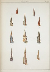 The zoology of the voyage of H.M.S. Samarang: under the command of Captain Sir Edward Belcher during the years 1843-46