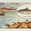 Sea-Trout fishing in the Hebrides.