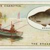 Bream fishing on the Broads.
