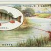 Perch fishing on the Lea.