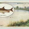 Barbel fishing on the Trent.