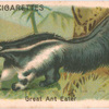 Great Ant Eater.
