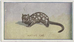 Native cat.