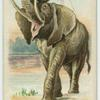 The Elephant.