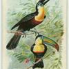 The Hornbill.