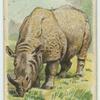 The Rhinoceros.