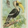 The Toucan.