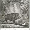 Anno 1735 haben Thro Hochfürstl. Durchl. Carl Alexander Herzog zu Würtenberg dises Extra Haupt Schwein welchem das obere gewörff auf beyden seiten heraus und eines zoll tieffs in dem Rüssel hin ein gewachsen auf einem Jagen bey Stuttgard geschossen.