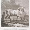 Anno 1740. Ist dises noble Pferd so ein Schimel mit liecht und dunckel brumen auch grauen Flecken gesprengt, mit schwarzen extremiteten aan Ohren Maul und Schencklen gezeichnet in dem Kayserl. Reitstall zu Wien nach dem Leben gemahlt worden.