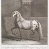 Anno 1746. Ist dises Edle Leib Pferd Sr. Hoch Fürstl. Durchl. Carl Eugenii Regirende Herzogs zu Würtenberg nach dem leben gemahlt und mir zu fesant worden. An farbe ware es von vornen Grau mit weis gesprengt über dem Creutz gantz weis mit schwarzen flecken, die schenckel dunckel grau die Moen und schweis Liecht.