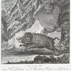 Anno 1615, die 3 xbris.  Haben Herr Wilhelm von Maxelheim Freyherr von Waldeck, dises Haupt Schwein im Forst Dürenpüchs beym Forsts grund gefangen und istes ini diser abbildung mit seinem rahren Gewerffe nonch auf dem Schloss Norrenborff zu Sehen.